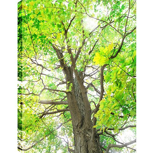 Green Leaves' Photographic Print on Wrapped Canvas