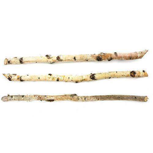 Tige de bouleau blanc naturel, paquet de 3