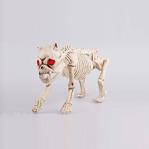 French Bulldog Skeleton