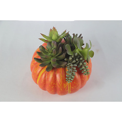 7-inch Pumpkin and Succulents Harvest or Halloween Decoration