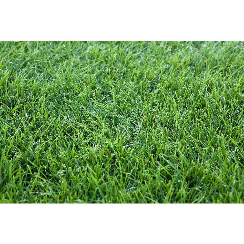 Harmony Grass Sod - 1250 sq ft
