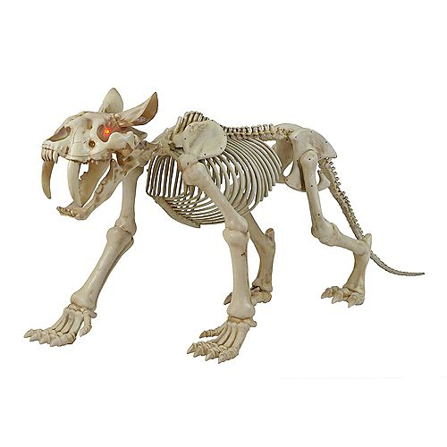 72-inch Long LED-Lit Skeleton Sabretooth Tiger Halloween Decoration