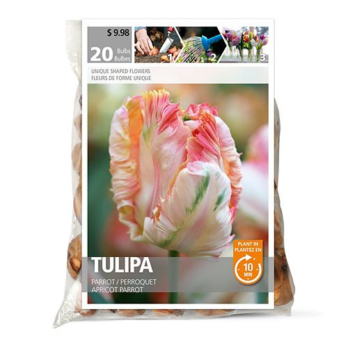 Tulip Apricot Parrot Flower Bulbs (20-Pack)