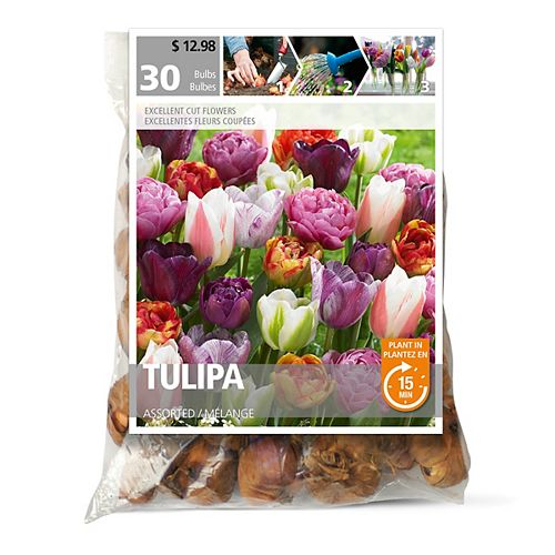 Tulip Assorted Flower Bulbs (30-Pack)