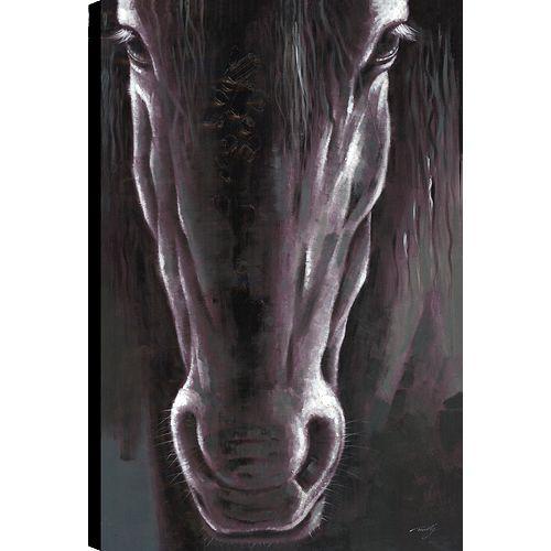 Black Beauty, Animal Natue Art, Canvas Print Wall Art Décor 36X24 Ready to hang