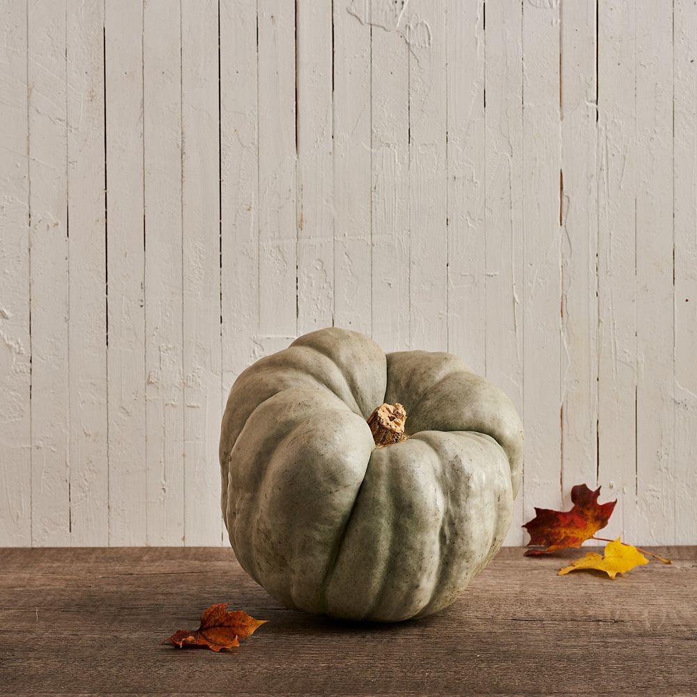Manderley Turf Ornamental Heirloom Pumpkin