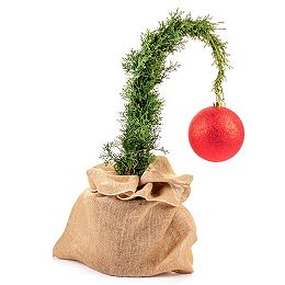 Grinch Living Christmas Cedar Tree 2G (7.5L)