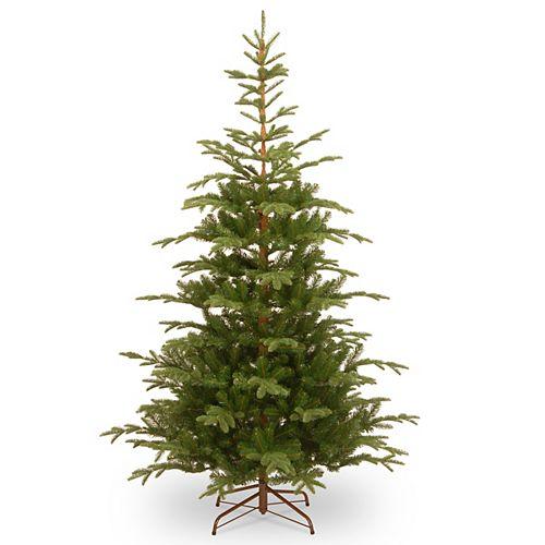7.5 ft. Norwegian Spruce Tree