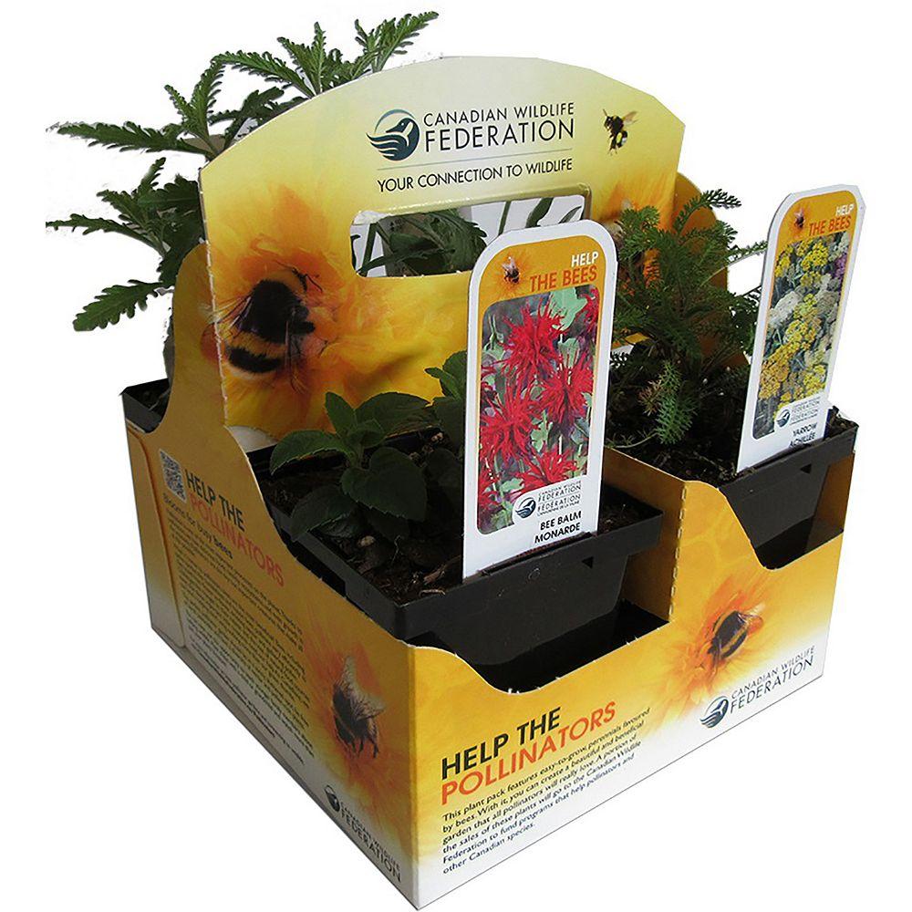 CWF CWF Bee Plant Pack