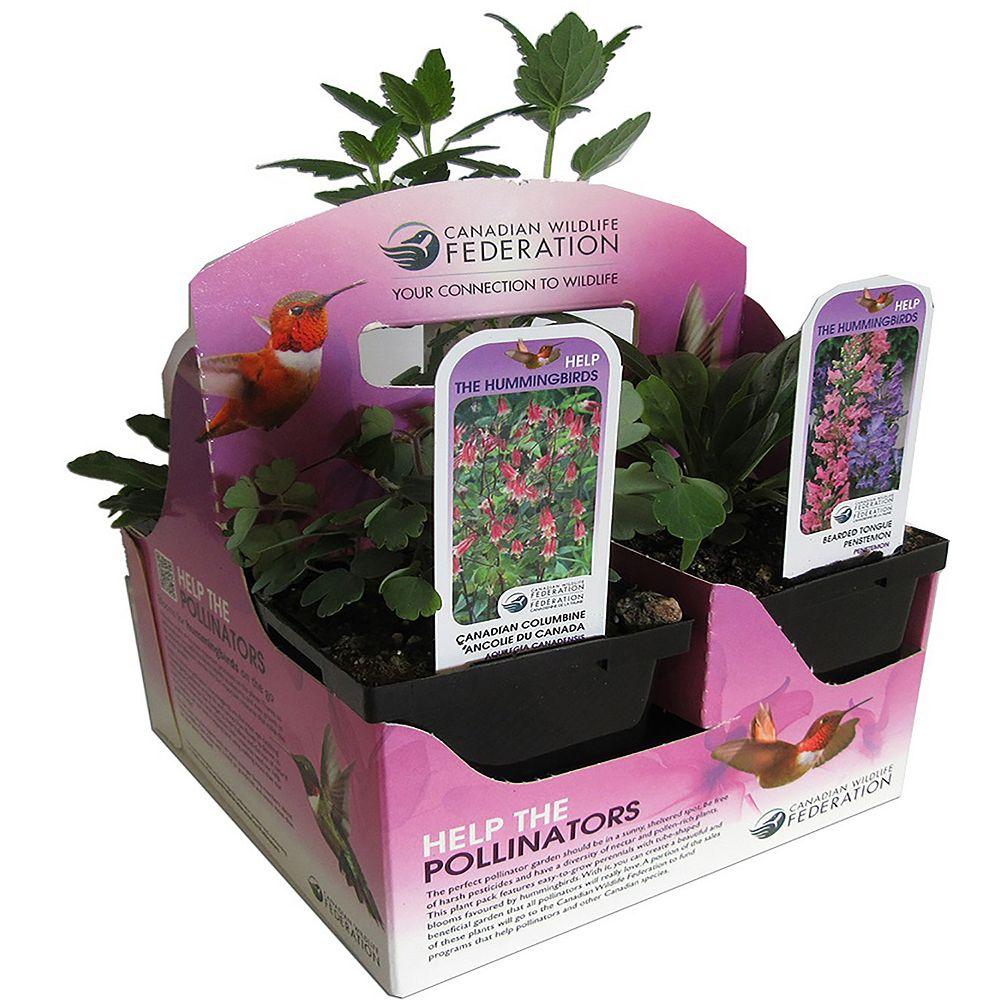 CWF CWF Hummingbird Plant Pack