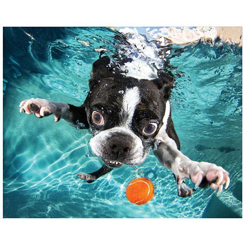 Empire Art Direct Boston Terrier Frameless Free Floating Tempered Glass Panel Graphic Wall Art