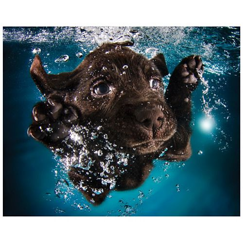 Empire Art Direct Black Lab Frameless Free Floating Tempered Glass Panel Graphic Wall Art