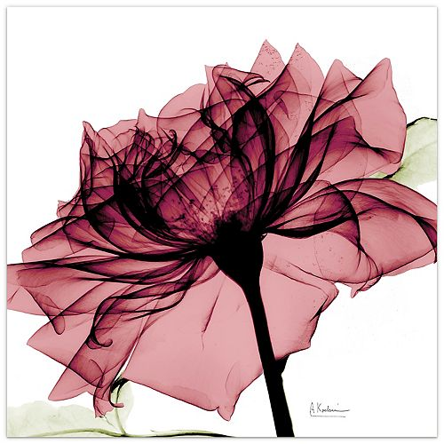 Empire Art Direct Chianti Rose I Frameless Free Floating Tempered Glass Panel Graphic Wall Art