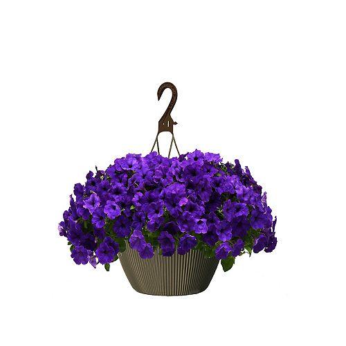 10 inch Hanging Basket Petunia Blue