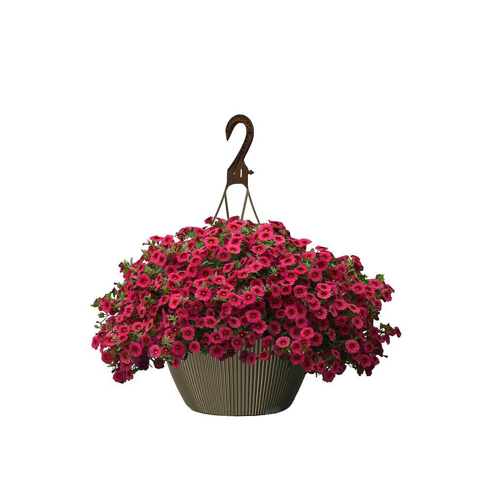 Landscape Basics 10 inch Hanging Basket Calibrachoa Red