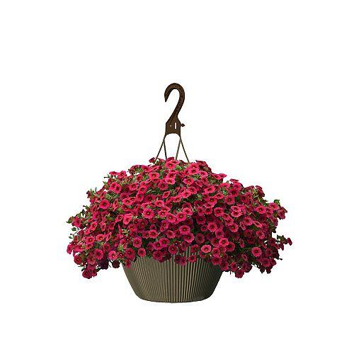 10 inch Hanging Basket Calibrachoa Red