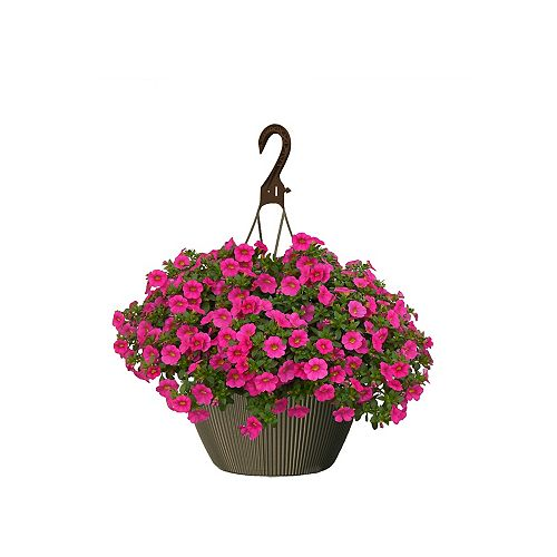 10 inch Hanging Basket Calibrachoa Pink