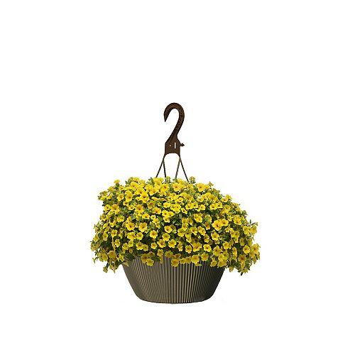 10 inch Hanging Basket Calibrachoa Yellow
