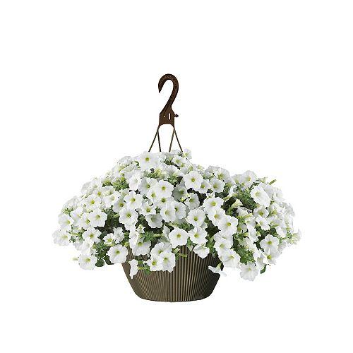 10 po Panier Suspendu Pétunia Blanc