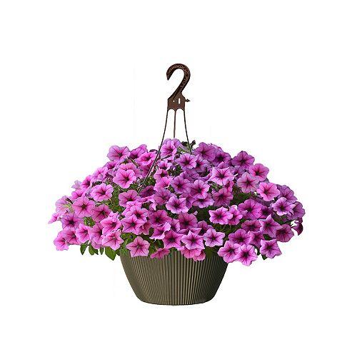10 inch Hanging Basket Petunia Pink