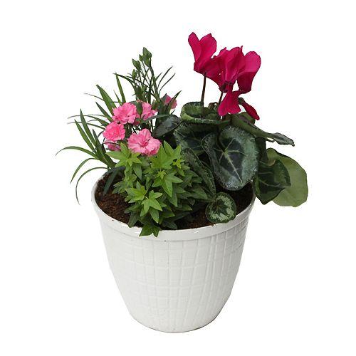 8-inch  Adelyn Planter