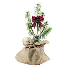 Hey Charlie! Scots Pine Holiday Planter 2g