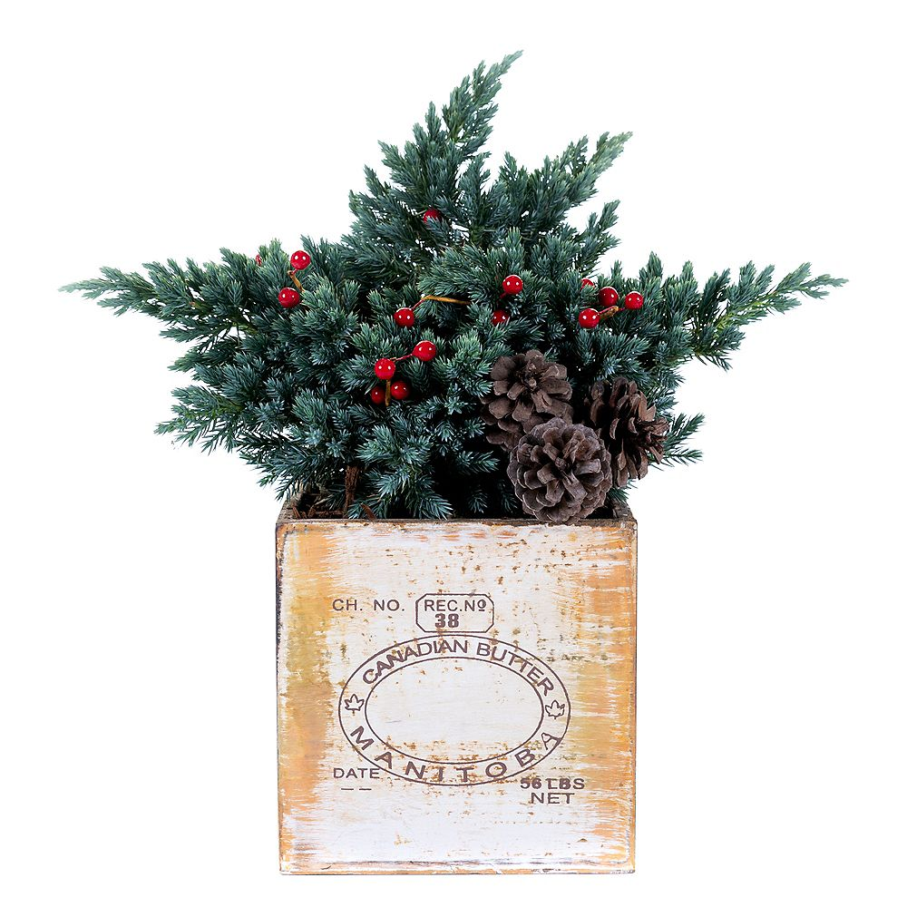 Holiday Cheer Youre a Star Juniper Planter 6in