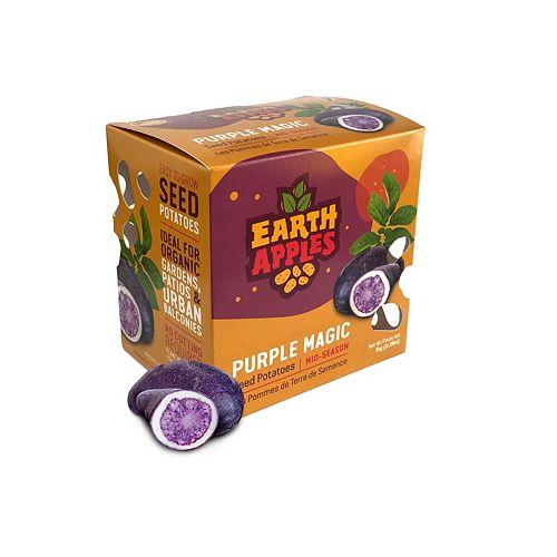 Pommes de terre de semence Purple Magic, Faciles à cultiver en jardinières ou dans le jardin