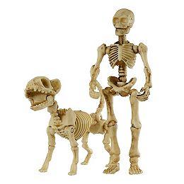 Assorted Posable Human/Cat Skeleton Halloween Decoration