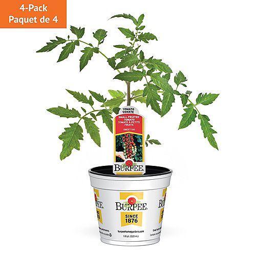 Tomate, super tomate cerise rouge Sweet 100; ensemble de 4