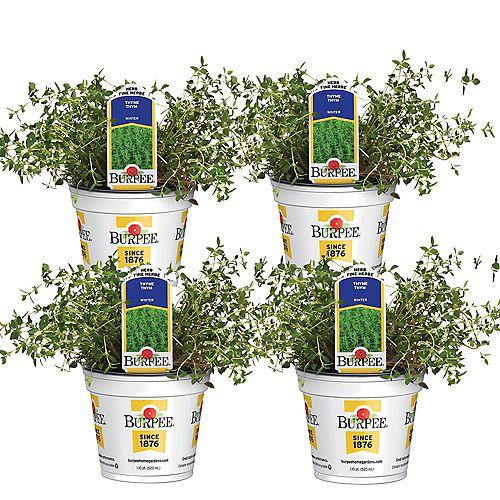 Fines herbes, thym Summer; ensemble de 4