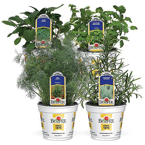 Fines herbes  Ensemble de 4 variétés «Gourmet Greens»: romarin, sauge, coriandre et aneth