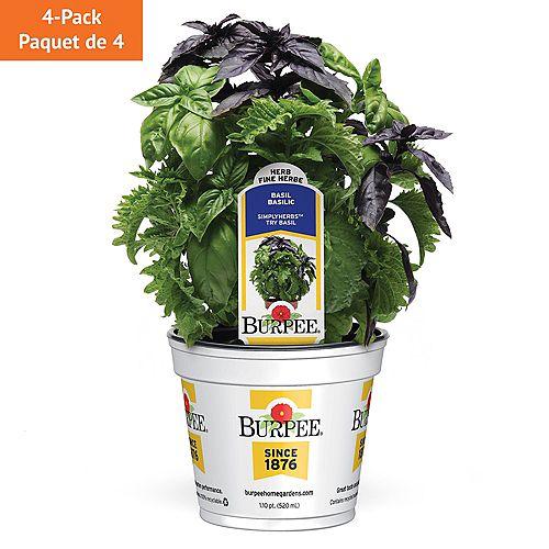 Fines herbes, 3 en 1 basilic Try; ensemble de 4