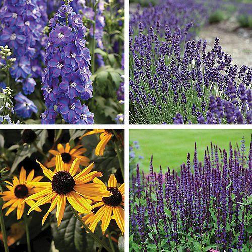 Garden Classics Flowering Plants - Foxglove, Lupine, Catmint, Sage (Salvia) - Assorted 4 Pack
