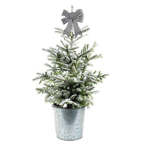 Épinette de style nordique comme arbre de Noël vivant en 2 g (7,5 l)
