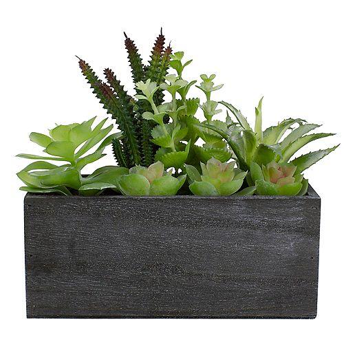 """10 """"plantes succulentes mixtes artificielles dans une planière rectangulaire"""